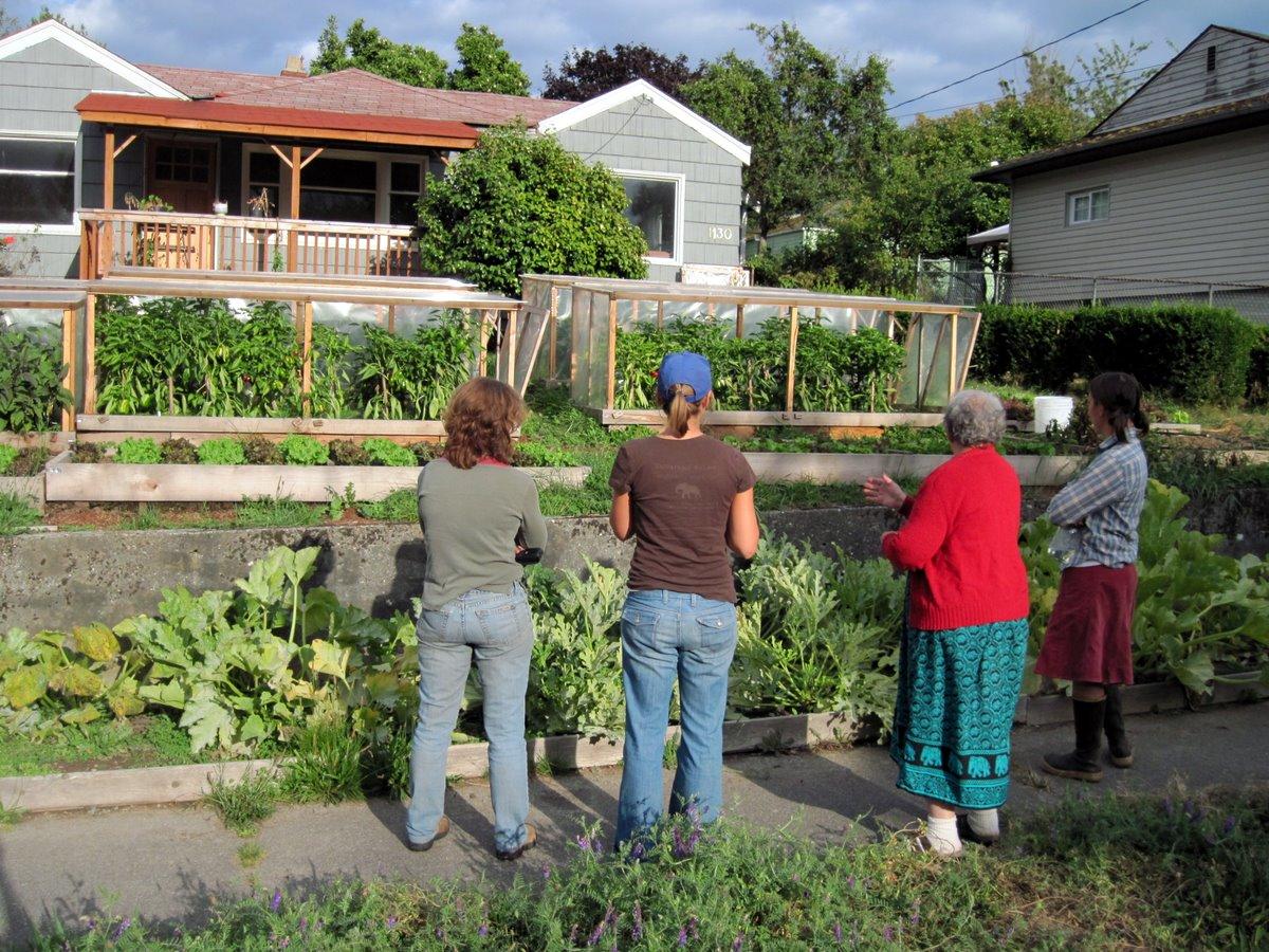 yard garden plot homesteading