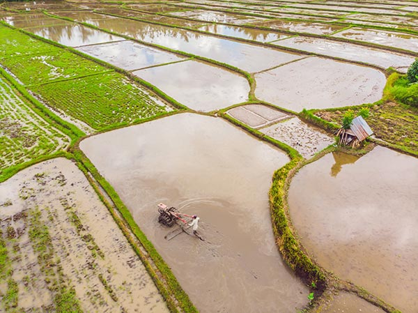 Potential food crisis looms large over China as floods, torrential rains ruin rice crops